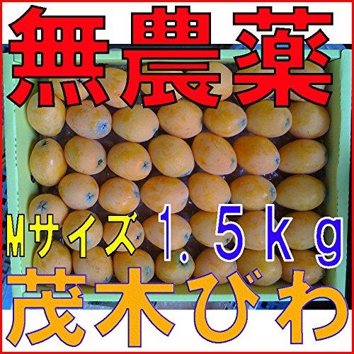 長崎産 無農薬 茂木びわ Mサイズ 1.5kg入 びわ ビワ 枇杷