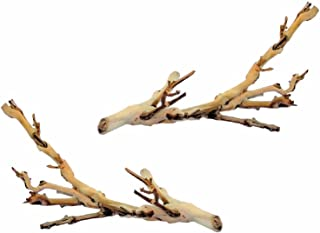 (2 Pack) Exo Terra Forest Branch Small