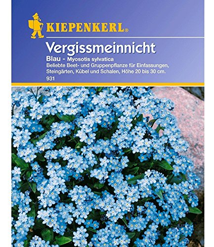 Vergissmeinnicht \'Blau\',1 Portion