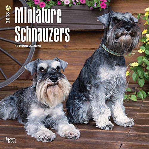 Miniature Schnauzers - Zwergschnauzer 2018 - 18-Monatskalender mit freier DogDays-App: Original Brow