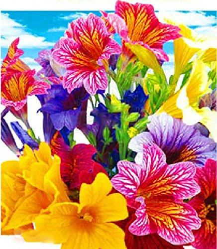 (Casino mixte 150 * Ambizu *) 5 Packs originaux, 30 graines/Pack, Casino mixte' Salpiglossis Sinuata, Langue peint, velours trompette fleur