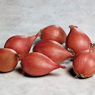 David's Garden Seeds Shallot Conservor 9823 (Red) 100 Non-GMO, Hybrid Seeds
