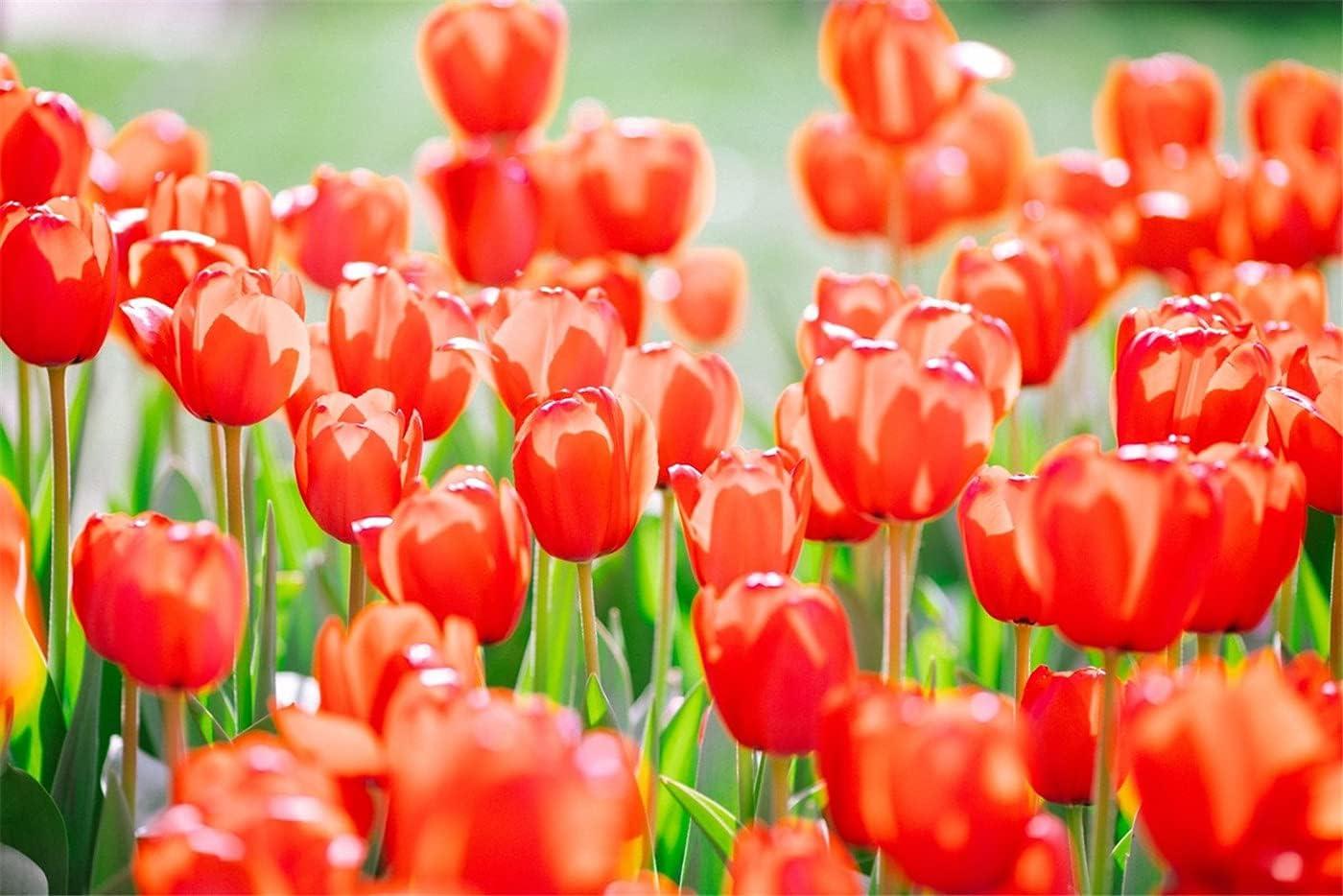 Tulip Rhizomes Lovely Time sale Super special price Flowers Unique Decora Shape Party Splendid