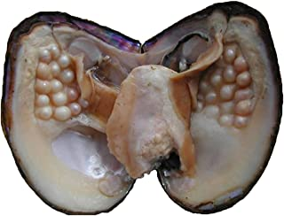 Oyster Pearls, POSHOPS Freshwater Cultured Big Oysters with Pearls Inside Pearl an Oysters Home Decoration Jewelry Making (5-7 mm, 20-25 Pearls in One Oyster)