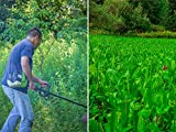 How To Make A Killer Food Plot With Little To No Equipment