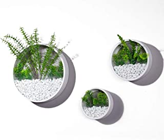 3 Pack Set Modern Wall Planters Succulent Planter Circle Metal Flower Pot Indoor Air Plant Vertical Container Hanging Vase...