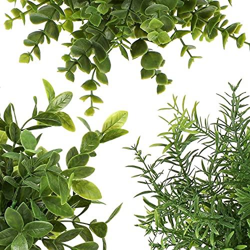 Delgeo Plantas