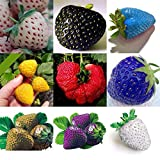 100 PC/bolso Semillas de color R paja arco fresas fruta multicolor Semillas Semilla Jardín Macetas y ERS