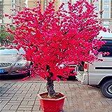 Loveble 20Pcs/50Pcs Graines de Cerisier Japonais Bonsai Graines Sakura Rose/Rouge