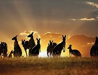 JP لندن pmur2370ustrip قش ّ ر ْ والصق ْ قابلة للإزالة ملصق حائط من الفينيل ملصق جداري ، الكنغر أفراد العائلة outback Wild...