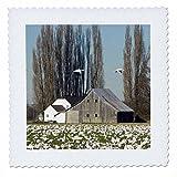3dRose QS 96867_ 1WA, Skagit Valley, Massen von Schnee