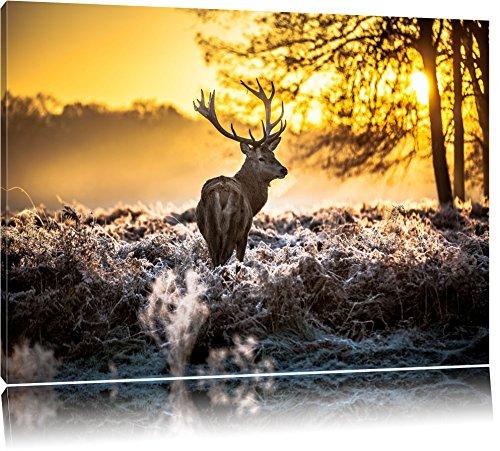 Pixxprint Hirsch im Wald Format: 80x60 auf Leinwand, XXL riesige Bilder fertig gerahmt mit Keilrahmen, Kunstdruck auf Wandbild mit Rahmen, günstiger als Gemälde oder...
