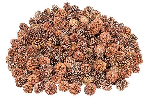 NaDeco Bergkiefer Zapfen ca. 3-5cm 0,5 kg Pinus mugo Tannenzapfen Bergkiefern-Zapfen Kiefernzapfen Tannen Zapfen Naturzapfen Weihnachtsdeko Adventsdeko