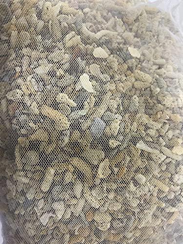 Arena coralina Jumbo 1-2 cm / 2 kg acuario marino Reef Barrera reactor de fútbol