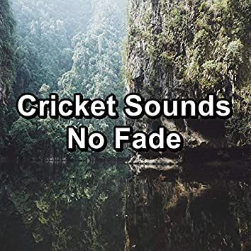 Cricket Sounds No Fade