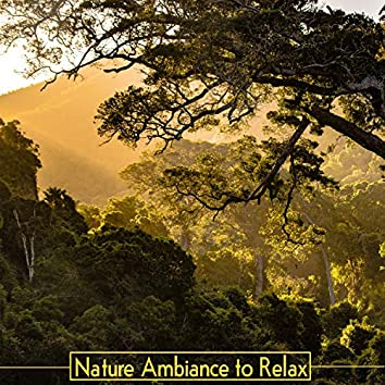 Nature Ambiance to Relax