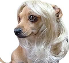 Best big blonde dog Reviews