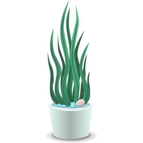 Plantes dintérieur