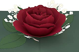 Best red rose bloom card Reviews