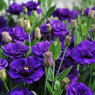 Countia Garden 50pcs Lisianthus Seeds Eustoma Seeds Bonsai Indoor Eustoma Flower Seeds Plant Flowers Seeds Mix