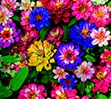 5G Mixed Zinnia Flower Seed Easy to Grow Plant
