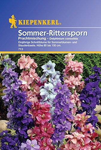 Rittersporn, 'Delphinium'