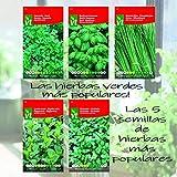 ¡Las hierbas verdes más populares - 5 semillas de hierbas