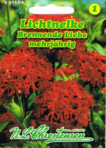 Lichtnelke Brennende Liebe Nelke Lychnis chalcedonica mehrjährig