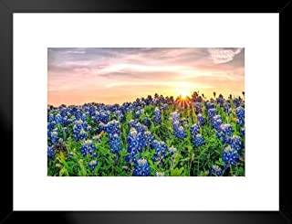 Poster Foundry Texas Bluebonnets at Sunset Photo Art Print Matted Framed Wall Art 26x20 inch