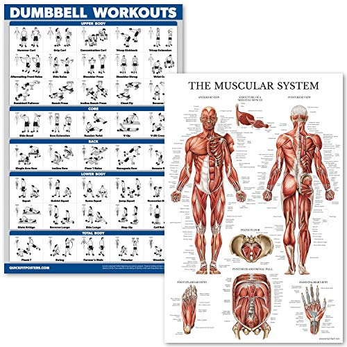 QuickFit Dumbell Workouts and Muscular System Anatomy Poster Set - Laminated 2 Chart Set - Dumbbell Exercise Routine & Muscle Anatomy Diagram (Laminated, 18