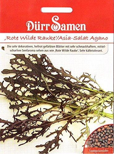 Rote Wilde Rauke, Asia Salat Agano, Brassica juncea, ca. 100 Samen