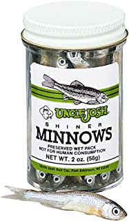 fishing with salted minnows