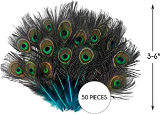 50 Pieces - Turquoise Blue Mini Natural Peacock Tail Body with Eyes Wholesale Feathers (Bulk) Halloween Costume Craft Supplier AMA | Moonlight Feather