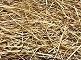 AA Plus Shop 100% Natural Wheat Straw Grass, Animal Bedding and Farm Wheat Straw (4LB)