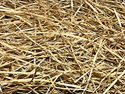 AA Plus Shop 100% Natural Wheat Straw Grass