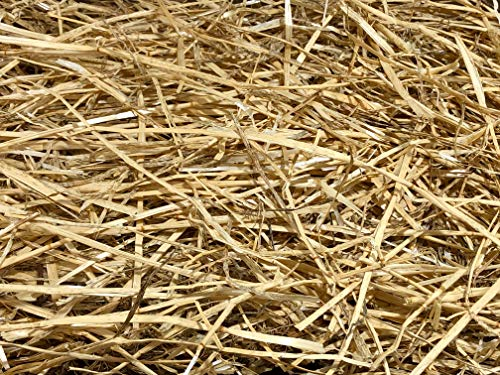 AA Plus Shop 100% Natural Wheat Straw Grass,...