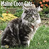 Maine Coon Cats Calendar 2020