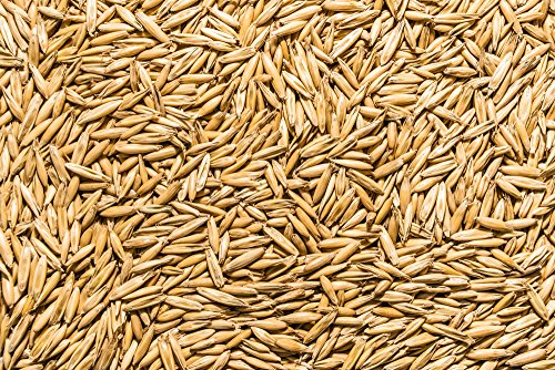Thunder Acres Non GMO, Certified Organic, Oat Seed (5 lb.)
