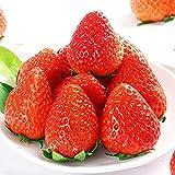 ADHG 300 Pz/Pacco Semi di Fragola Gigante Molto deliziosi Semi di Frutta Fragola di Frutta per Giardino Domestico
