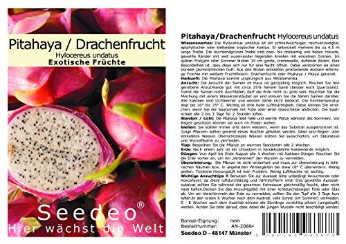 Seedeo® Pitahaya/Drachenfrucht Hylocereus undatus 20 Samen