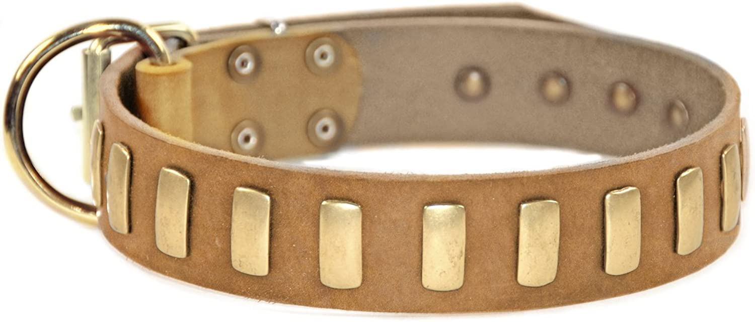 Dean and Tyler  PLATED PERFECTION , Dog Collar with Solid Brass Buckle  Tan  Size 46cm by 4cm  Fits Neck Size 41cmes to 51cmes.