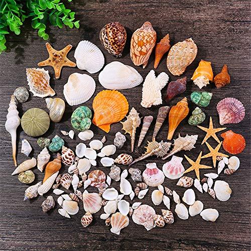 Conchas de mar surtidas DIY Natural playa conchas con estrellas de mar Concha para fiesta decoración del hogar, tanque de peces, accesorios de manualidades (entrega al azar)
