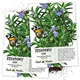 Seed Needs, Rosemary Culinary Herb (Rosemarinus officinalis) Twin Pack of 100 Seeds Each Non-GMO