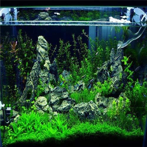 Pinkdose 100 pcs/sac aquarium de poissons d'aquarium pelouse herbe eau aménagement paysager décoratif nouvelles usines de semences de gazon graines aquarium: E