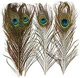 Baker Ross- Plumas Naturales de Pavo Real (Pack de 10) para manualidaes Infantiles