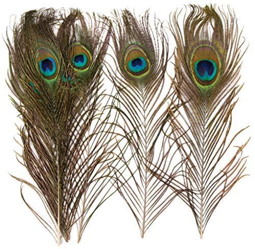 Baker Ross Natürliche Pfauenfedern für Kinder/Erwachsene zum Basteln und Dekorieren von Kostümmasken (10 Stück) - zum Verkleiden und Karneval