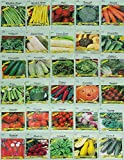 Set of 30 Assorted Vegetable & Herb Seeds 30 Varieties Create a Deluxe Garden All Seeds are Heirloom, 100% Non-GMO! by Black Duck Brand 30 Different Varieties