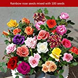 Pudincoco 100PCS / SET Rainbow Rare Multi Color Rose Flowers Seeds Home Garden Decor Plantas Semillas Beautiful Perennial Balcony Flower