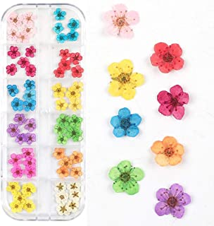 Valuu 3D Nail Art Dried Flowers Sticker 60 Five Petal Flower 12 Colors Natural Real Dry Flower Nail Art Decoration Beauty ...
