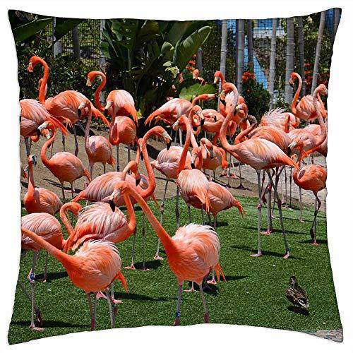 LESGAULEST Throw Pillow Cover (20x20 inch) - Zoo Animals Bird Flamingos Nature San Diego Zoo